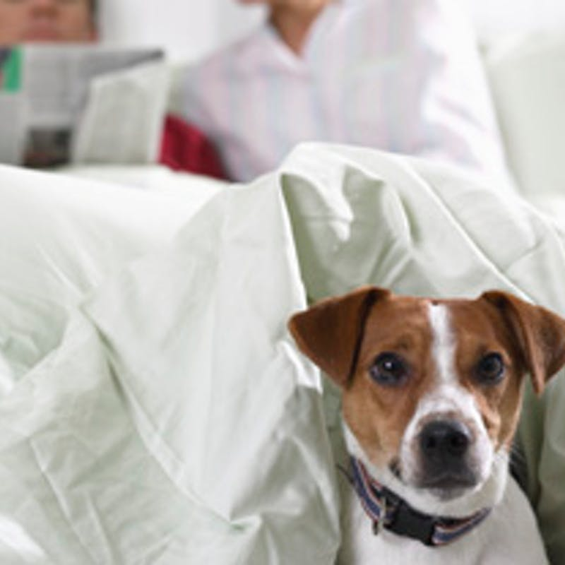 Les formalités pour voyager avec chiens et chats