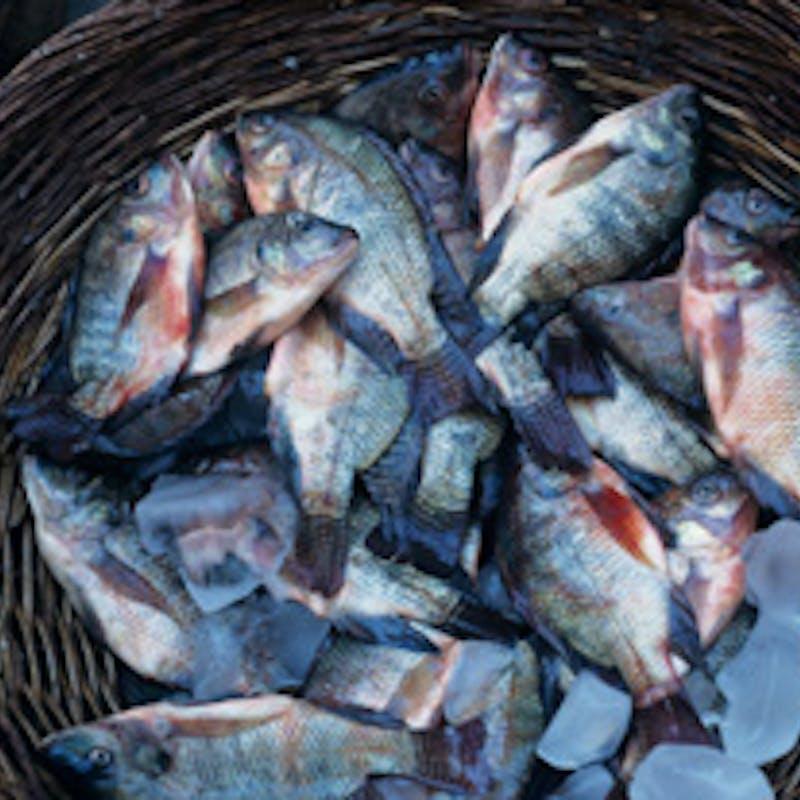 Acheter un poisson de bonne qualité