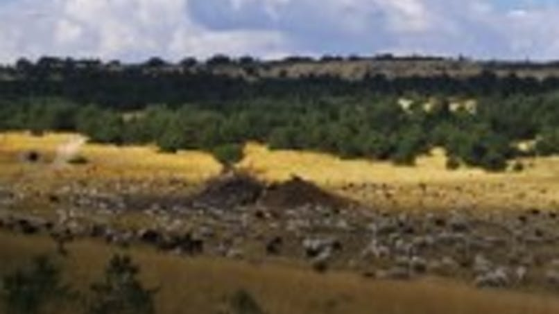 Dans les pas de Giono, la montagne de Lure