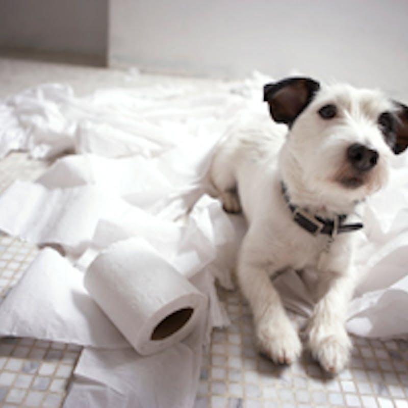 Nuisances : votre voisin abuse-t-il ?