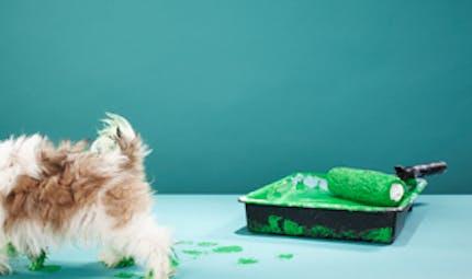 Mon chien a causé des dommages : quelle est ma responsabilité ?