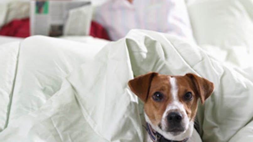 Trouver un dog-sitter ou une pension pour animaux