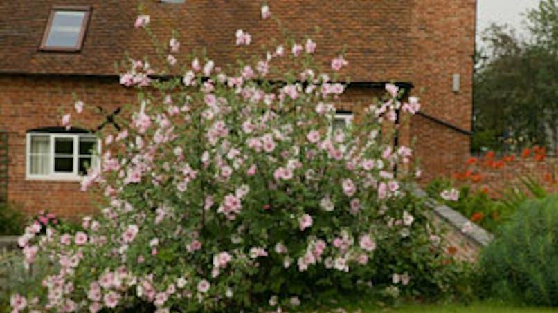 Jardinage : le Roundup Express est-il toxique ?