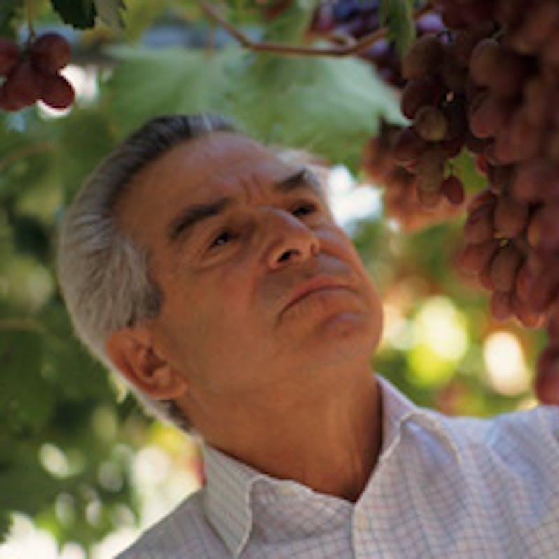 Vin bio, naturel ou biodynamique : quelle différence ?