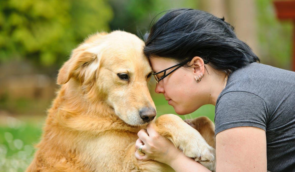 Un au revoir en douceur si votre chien est en de bonnes mains.