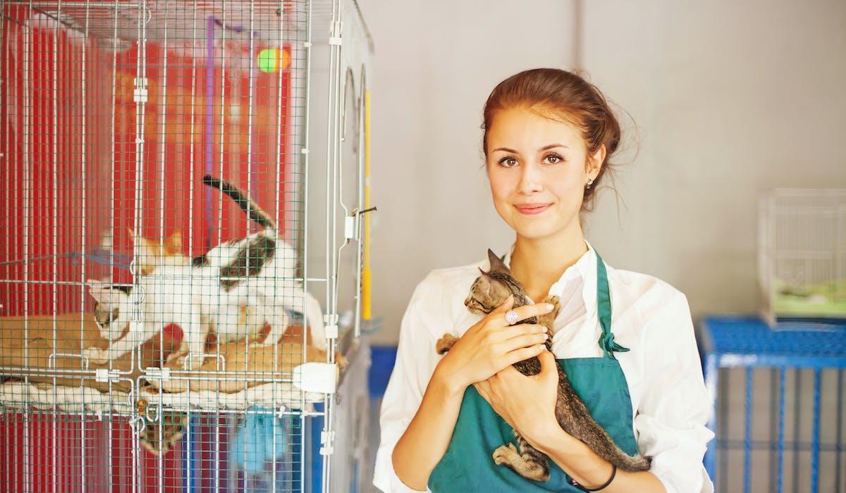 Quand les amis des animaux s'engagent auprès des chats perdus.
