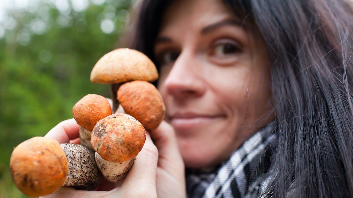 La cueillette des champignon est réglementée.
