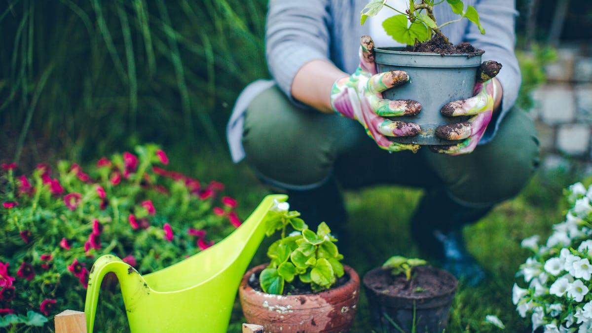 Jardiniers amateurs, vous allez devoir apprendre à jardiner autrement.