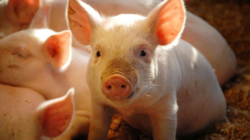Maltraitance animale dans un élevage : que dit la loi ?