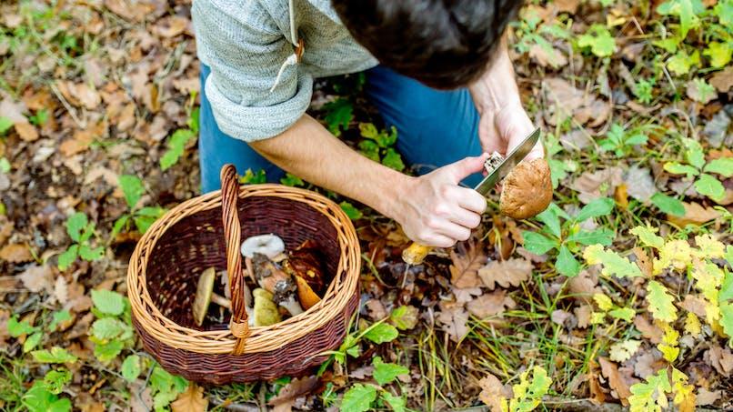 Cueillette des champignons : où et combien avez-vous le droit d'en prendre ?