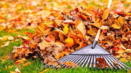 Que faire si les feuilles des arbres de mon voisins tombent chez moi ?