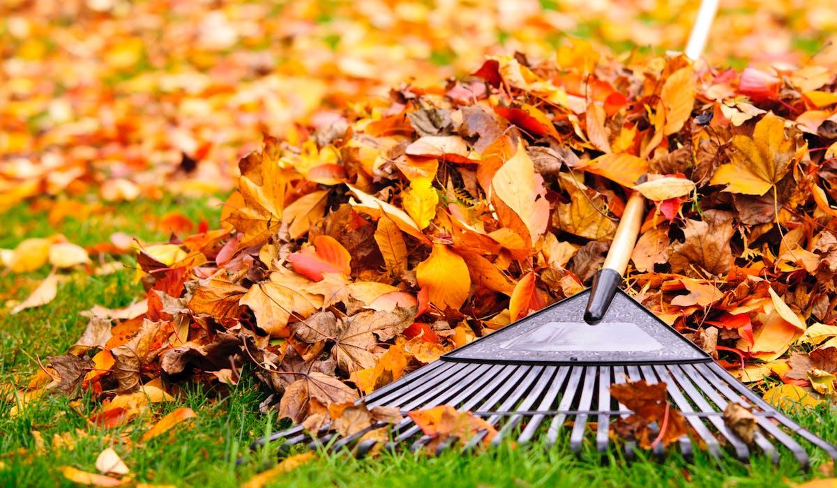 Les feuilles des arbres du voisin qui tombent chez vous
