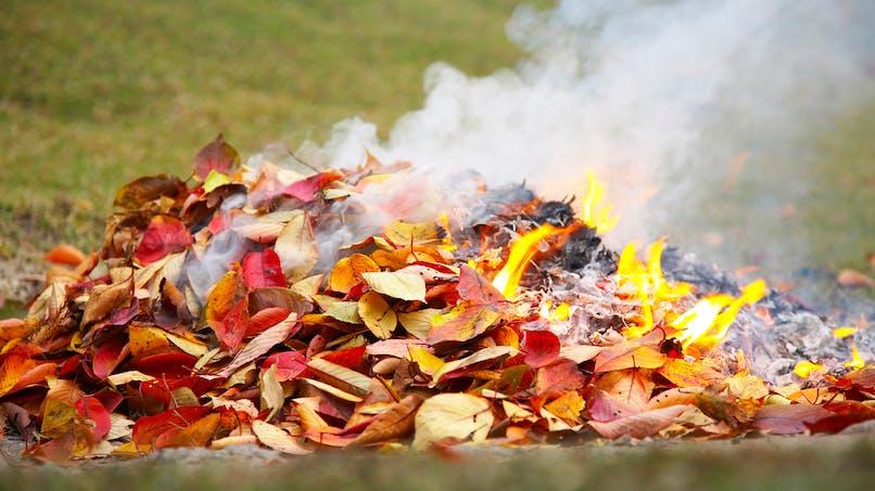 Pouvez-vous brûler des déchets végétaux dans votre jardin?