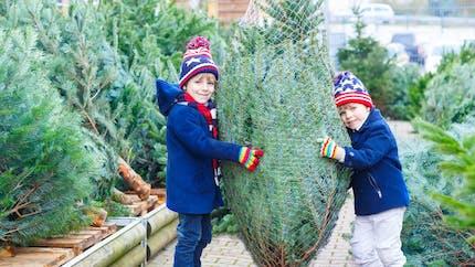 Noël : les bons plans pour acheter votre sapin