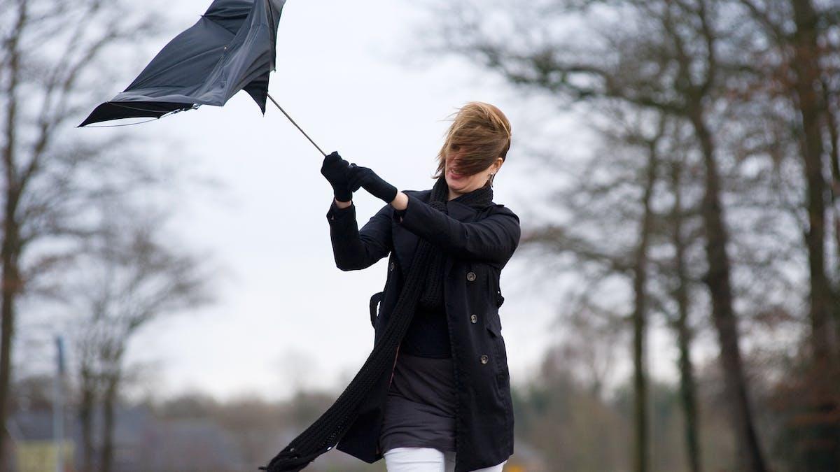 Gare aux chutes d'objets divers en cas de vents violents.