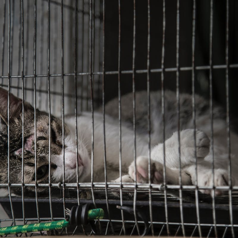 Maltraitance animale : que faire si vous êtes témoin ?