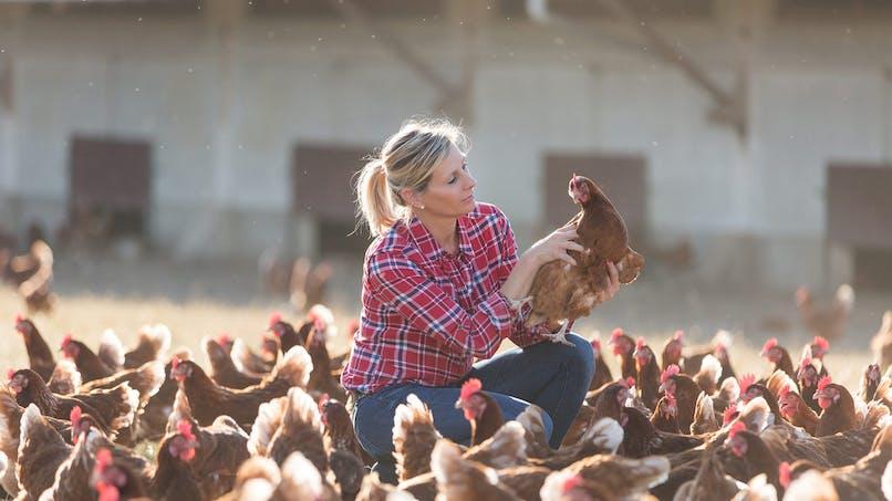 Tout plaquer pour devenir éleveur de poules avec Cocorette