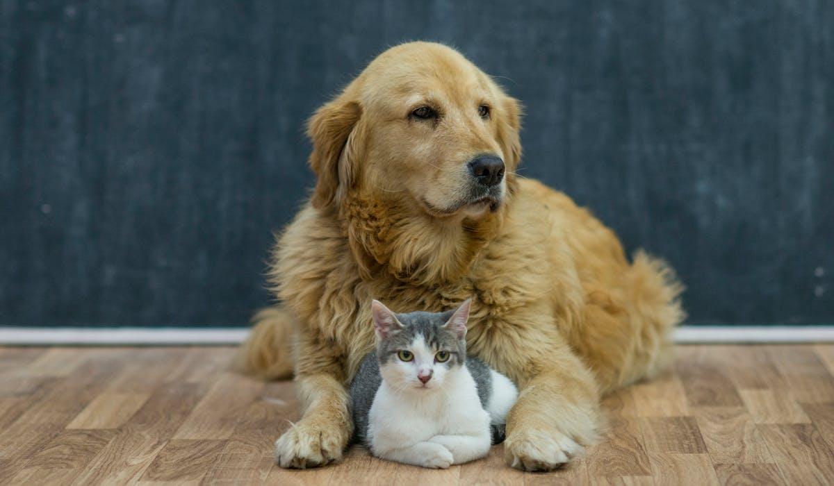 En France, près d'un foyer sur deux possède au moins un animal de compagnie.