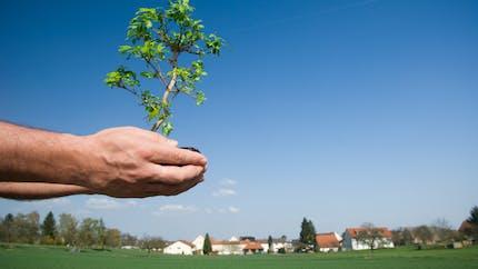 Les règles de plantation entre voisins à connaître