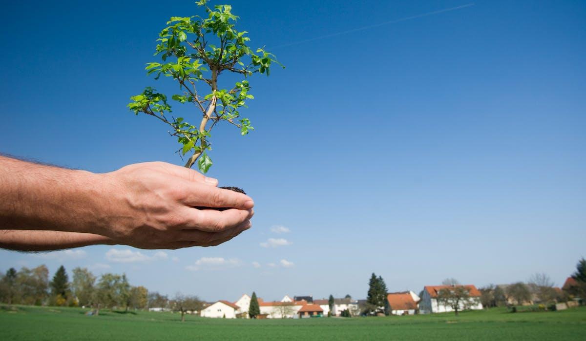 La réglementation de plantation du voisinage