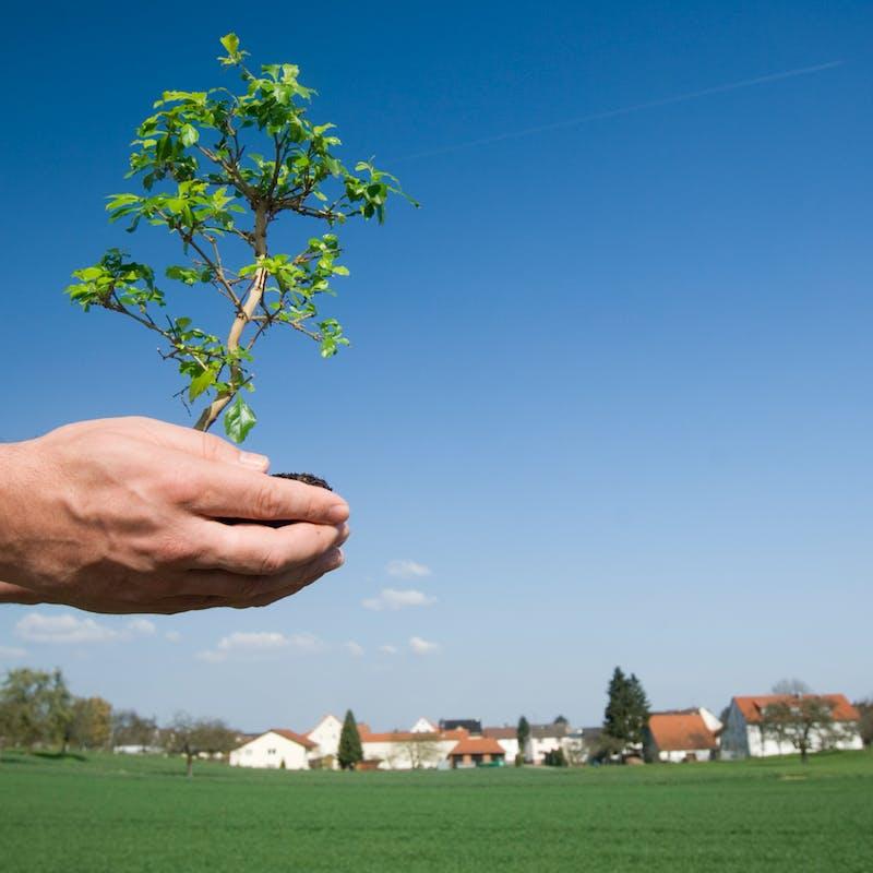 Plantations: les règles à connaître