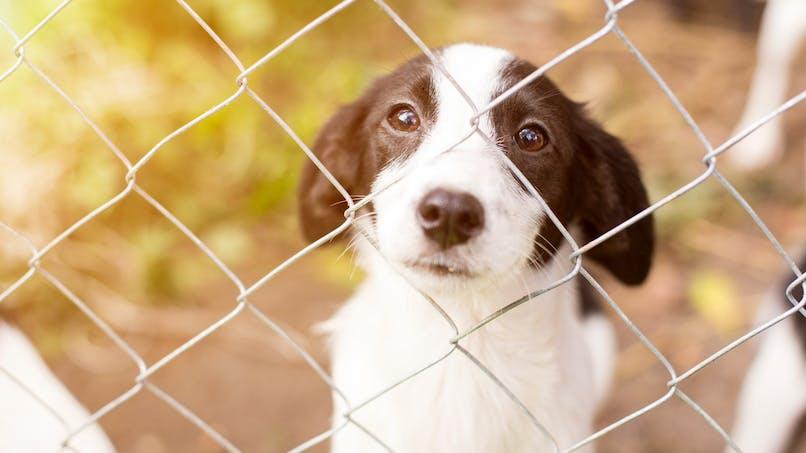 Animaux de compagnie : la SPA lance un appel à l'adoption