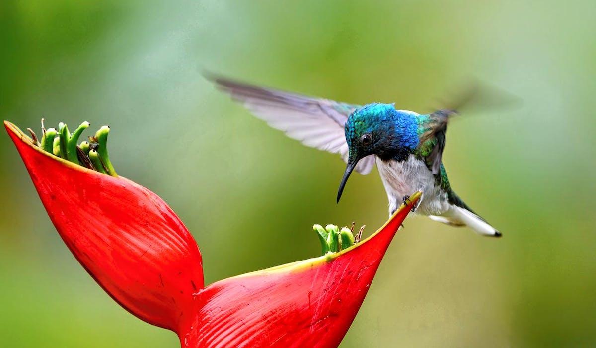 Plan biodiversité, ce qu'il faut retenir