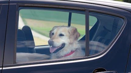 Animal enfermé dans une voiture en pleine chaleur : que risque le propriétaire ?