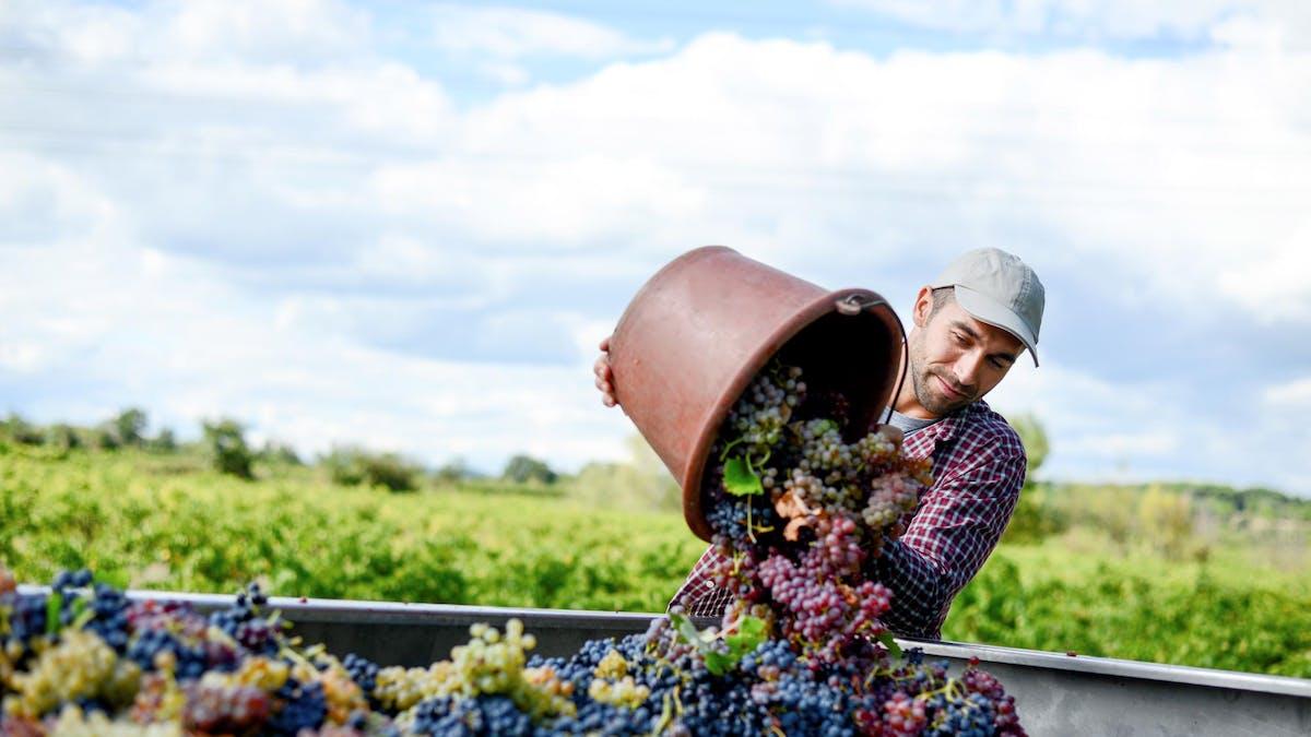 Les viticulteurs n'exigent aucune qualification particulière, mais une bonne condition physique.