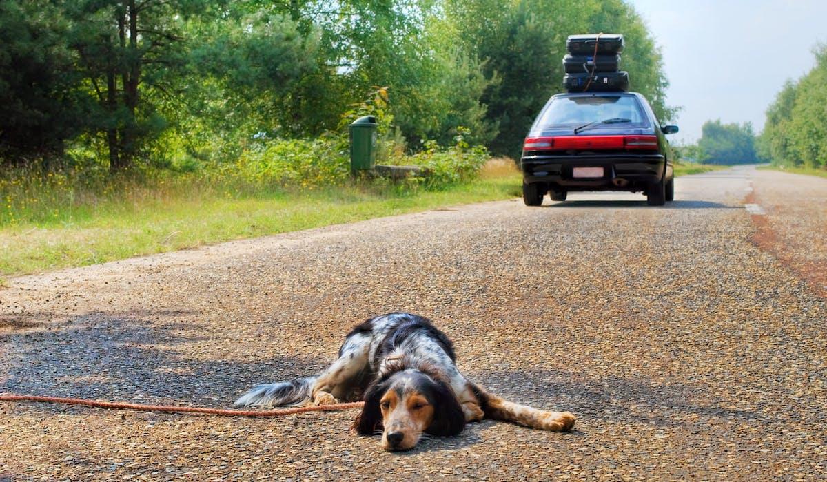 Quelque 60 000 animaux domestiques sont abandonnés chaque été en France.