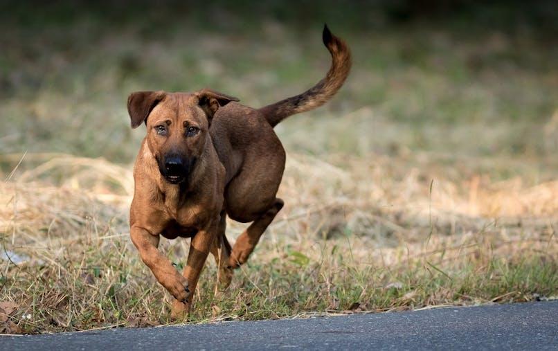 Un animal engage la responsabilité de son maître si son comportement crée un accident.
