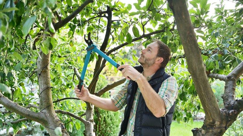 Voisinage : pouvez-vous obliger votre voisin à élaguer ses arbres ?