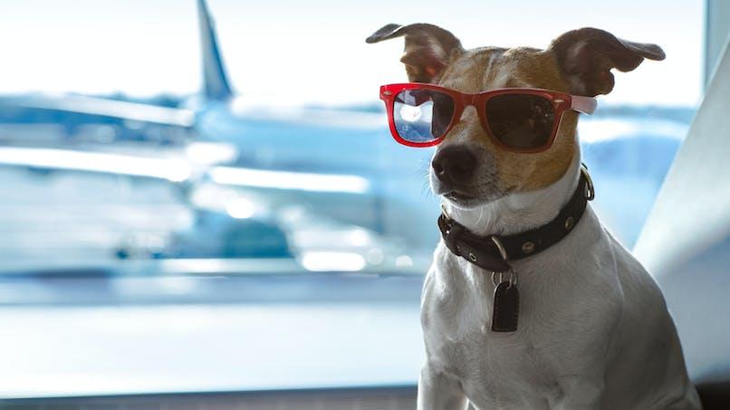 Les bons plans pour voyager avec son animal sans souci