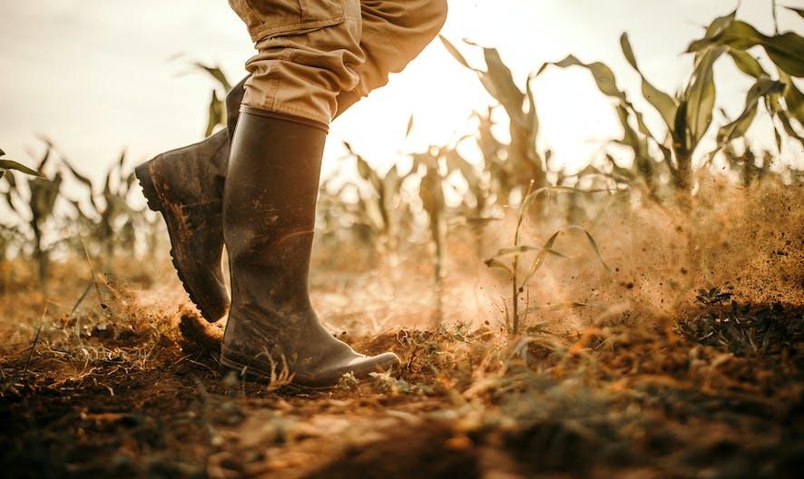 Tempêtes de grêle et canicule 2019 : quelles indemnités pour les agriculteurs victimes de calamités agricoles ?
