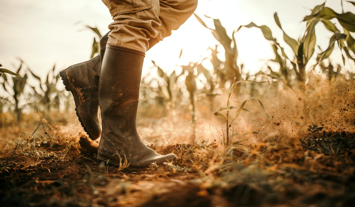 Quelles indemnités pour les agriculteurs victimes de calamités agricoles ?
