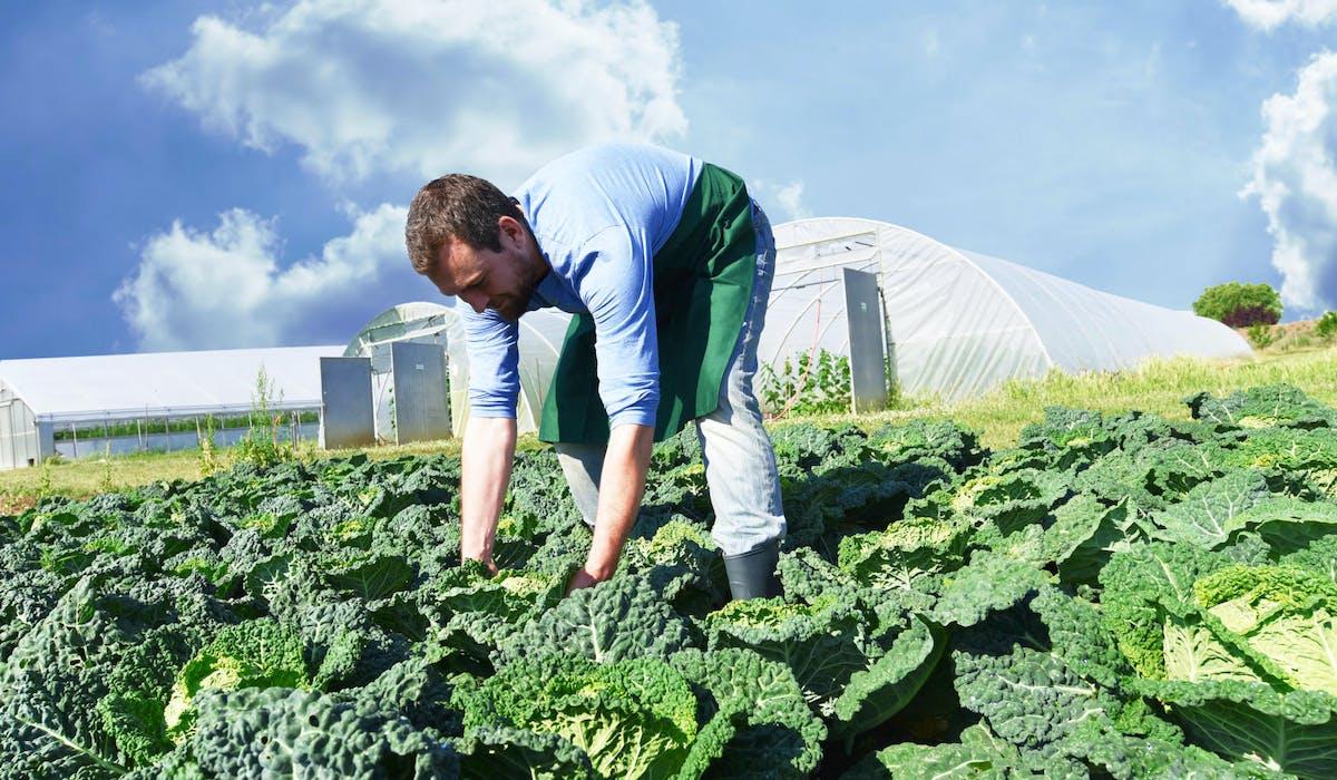 Les exploitants agricoles cotisent depuis 2003 à une retraite complémentaire obligatoire.