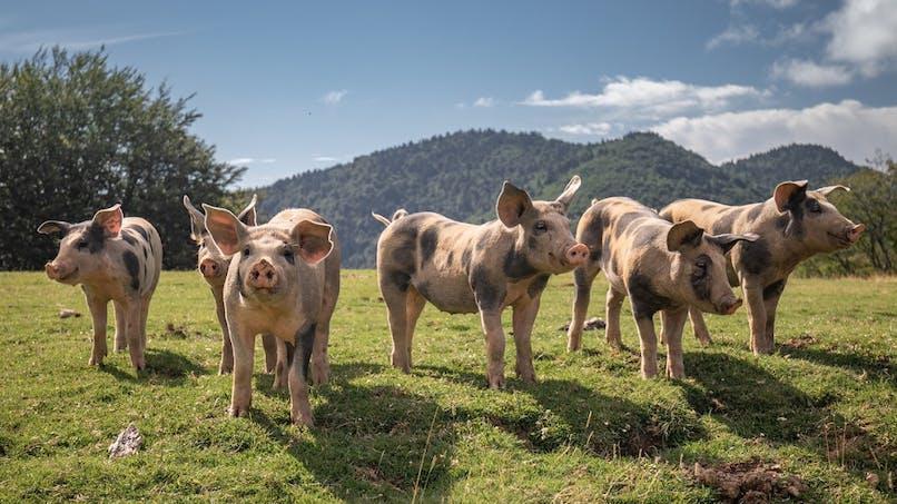 Bien-être animal : ce que veut faire le gouvernement