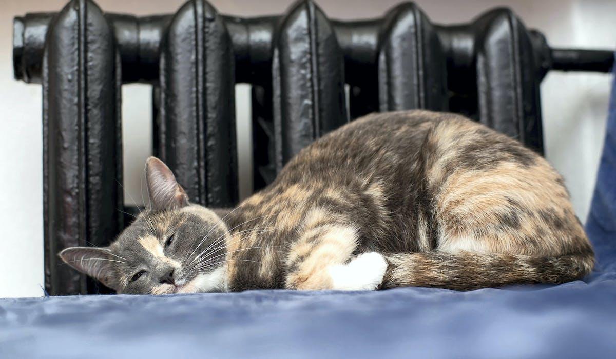 Un chat dort près d'un radiateur