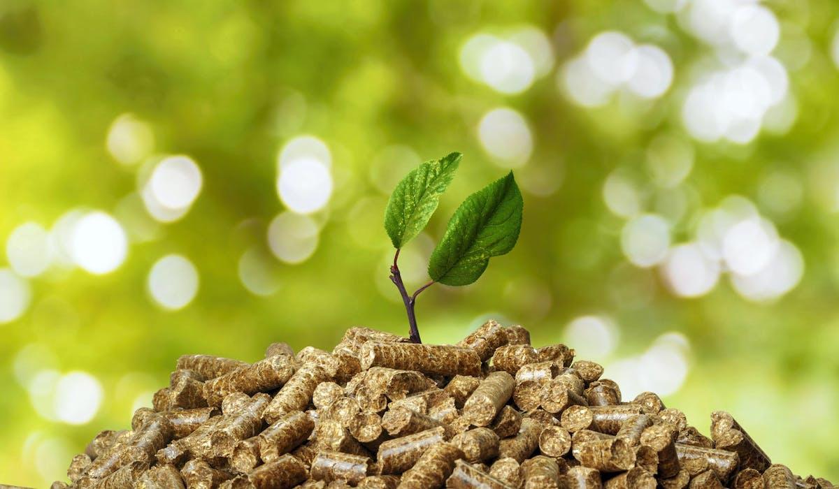 Les granulés de bois, un combustible écologique.