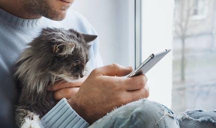 Animaux : vous pouvez téléconsulter un vétérinaire