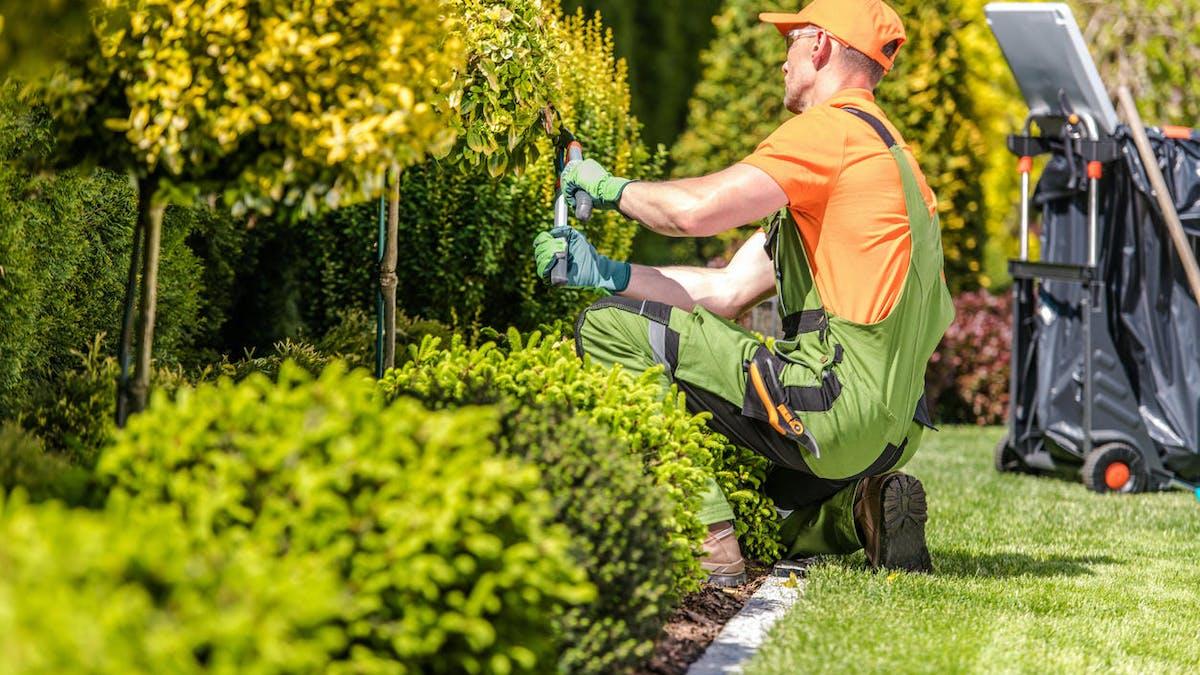 Un jardinier taille les haies chez des particuliers