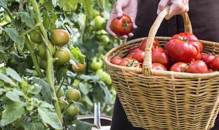 Vendre ses fruits et légumes sur le marché : quelles formalités ?