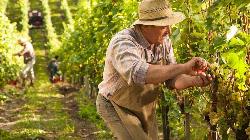 Retraite minimale des agriculteurs: ce que contient la proposition de loi