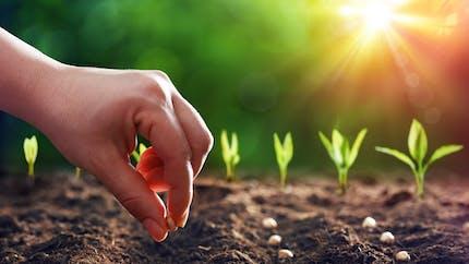 Jardinage : vous pouvez acheter des semences paysannes