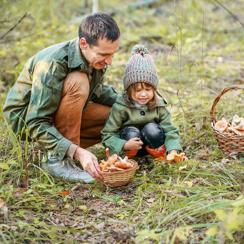 Cueillette de champignons : les conseils pour éviter les intoxications