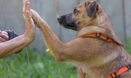 Lutte contre la maltraitance animale: ce que contient la proposition de loi