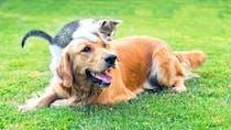 Les députés ont voté l'interdiction de la vente de chats et de chiens par les animaleries