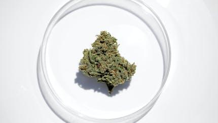 Qu'est-ce que le cannabis thérapeutique ?