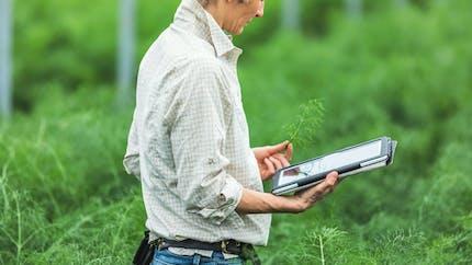 Arrêt de travail lié au Covid-19: les agriculteurs ont droit à une allocation de remplacement