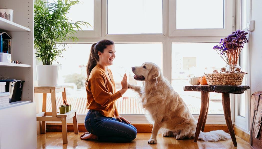 Quelle assurance pour votre animal de compagnie ?